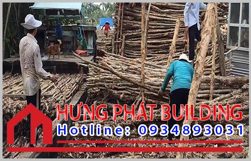 Giá cừ tràm tại Bình Phước không chênh lệch với giá trên thị trường.