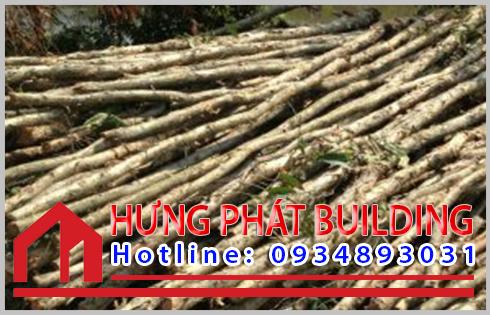 Giá cừ tràm An Giang hiện nay bao nhiêu tiền một cây.
