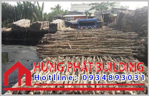 Huyện Cần Giờ cung cấp sản phẩm cừ tràm lớn nhất.