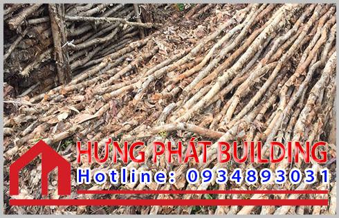Giá mua bán cừ tràm Quận Bình Thạnh bao nhiêu tiền 1 cây